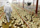 Pétition contre l'extension d'une exploitation avicole Commune de Wasseiges.
