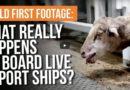 Pétition, exportations de moutons vivants d'Australie vers le Moyen-Orient